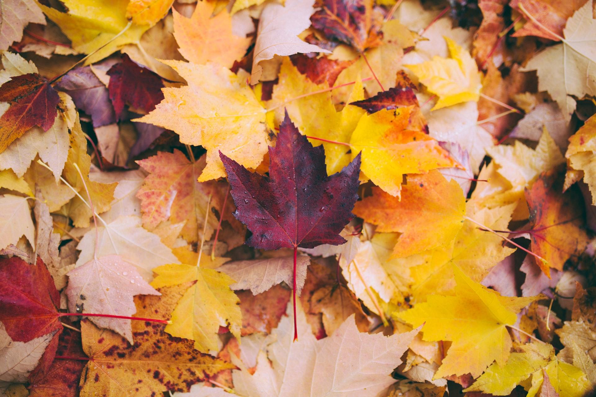 Autumns 5 Most Important Commercial Landscape Maintenance Tasks