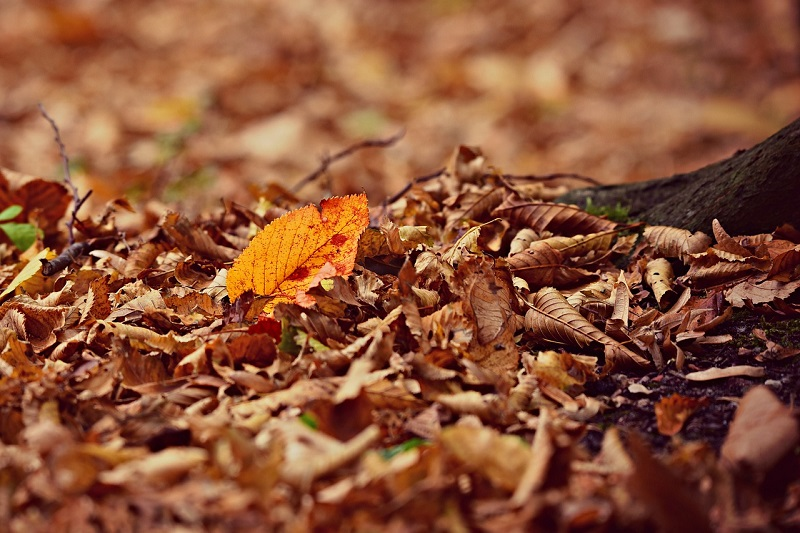 Don't Neglect Those Fallen Leaves - Why You Needed To Clear Them Up Yesterday