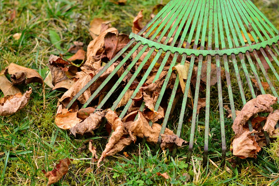 How To Quickly & Safely Remove Fallen Leaves From Your Grounds