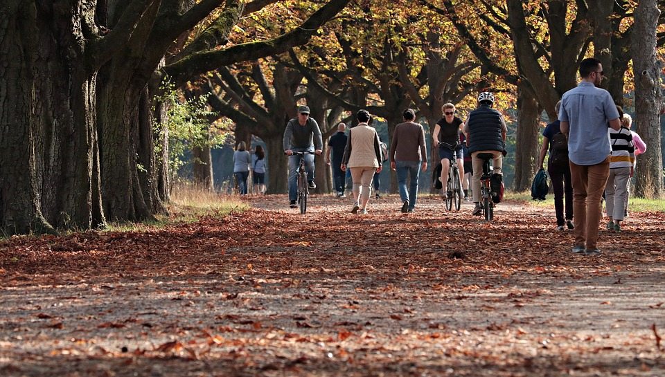 The Top Risks Fallen Leaves Can Cause To Your Business
